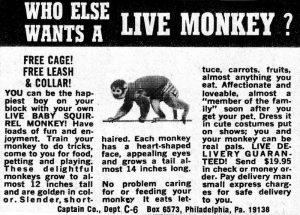 Live Monkey